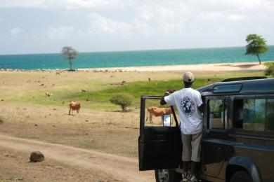 Les Grandes plaines et étendues sauvages de la Basse-Terre en Guadeloupe